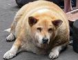 Hond en kat op afslankcursus